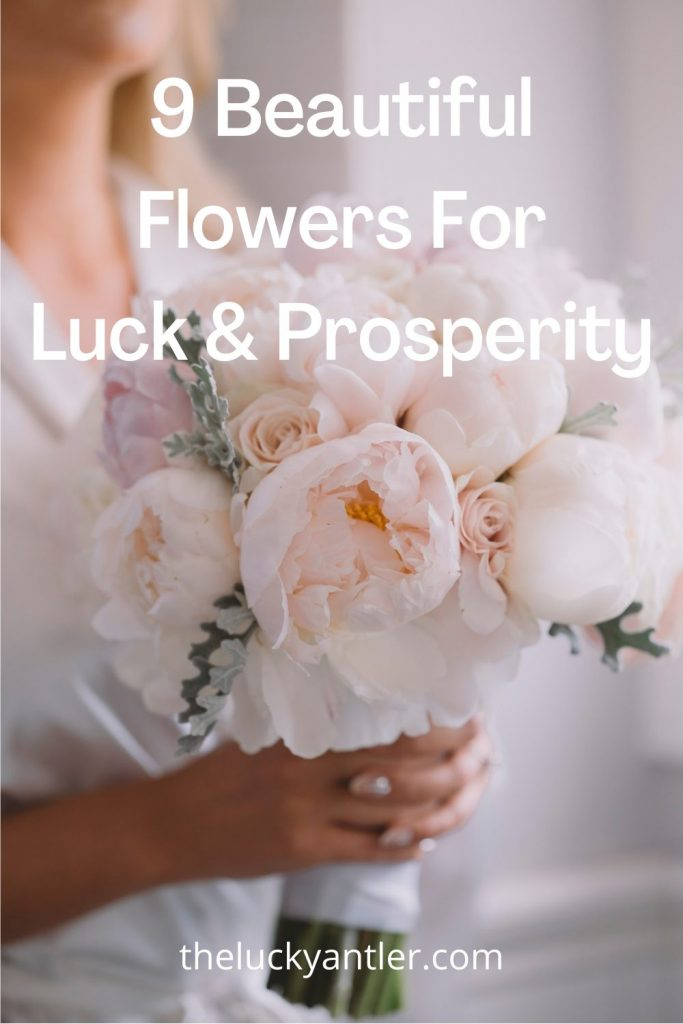 flowers for luck woman holding bouquet of white peonies