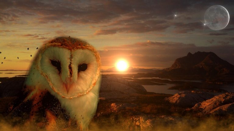 are owls good luck