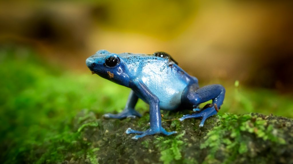 dream of a frog blue frog