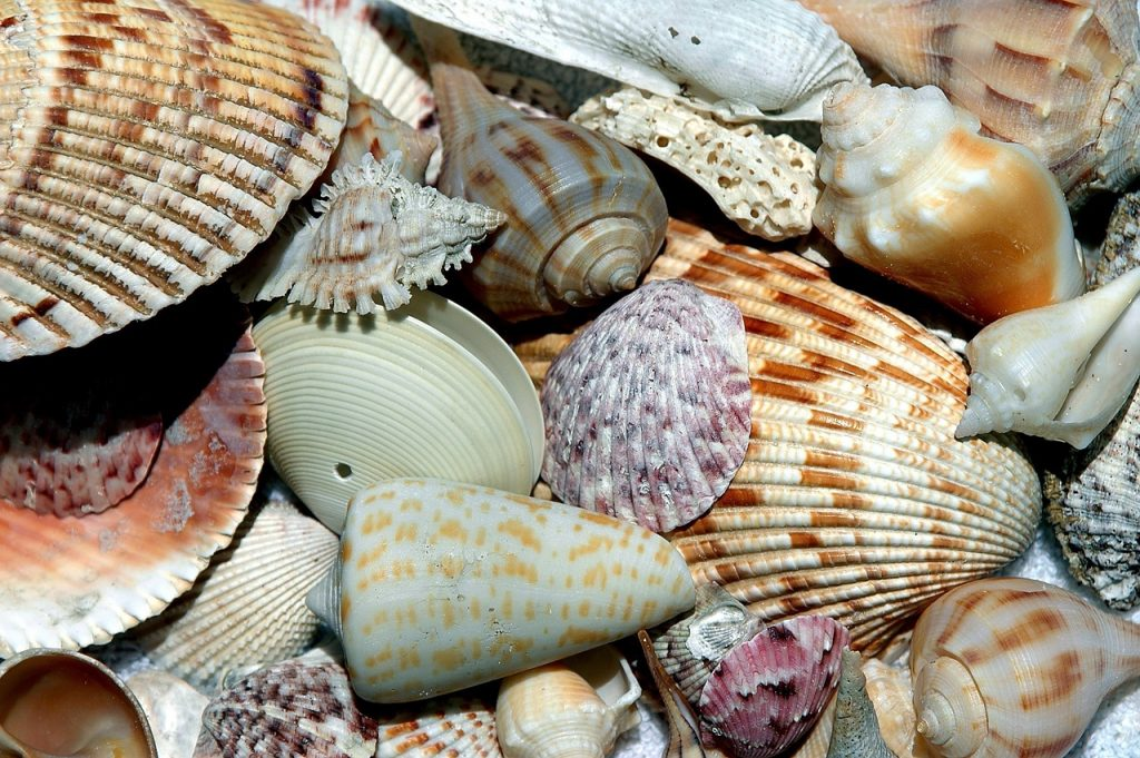 keep sea shells in wallet to attract money