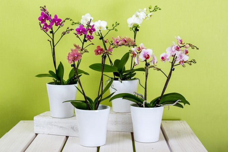 orchid meanings and symbolism